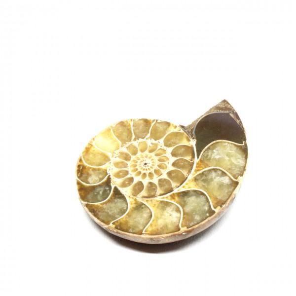 Wechselschließe Ammonit