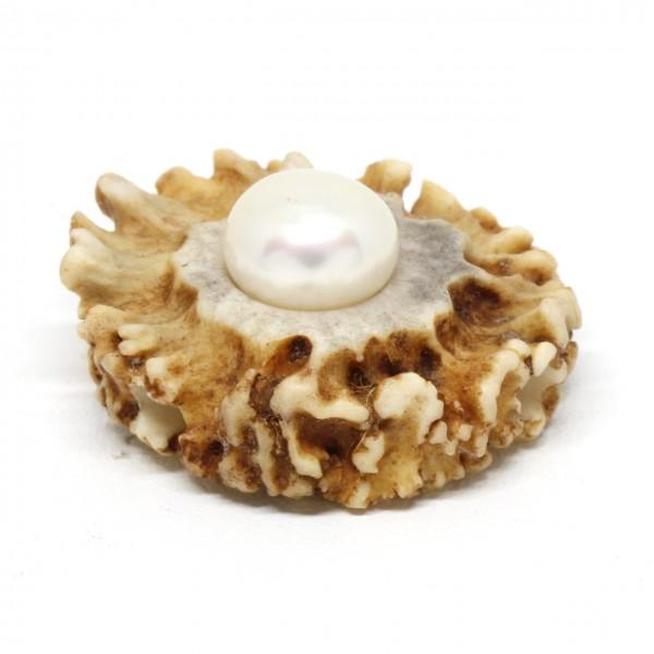 Wechselschließe Hirschhornrose mit Perle